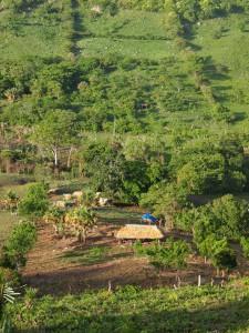 Vista de una parte de la tierra cooperativa desde arriba, incluyendo el campo de maíz que empieza a crecerse y la cabina donde dormimos